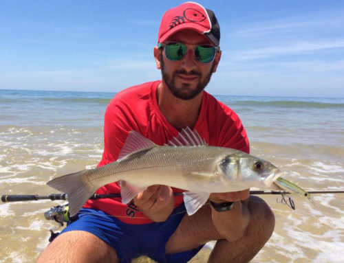 Lubina a spinning con Spanish Lures Sparrow