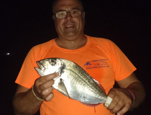 Pesca de la Dorada. Buena Temporada en Girona.