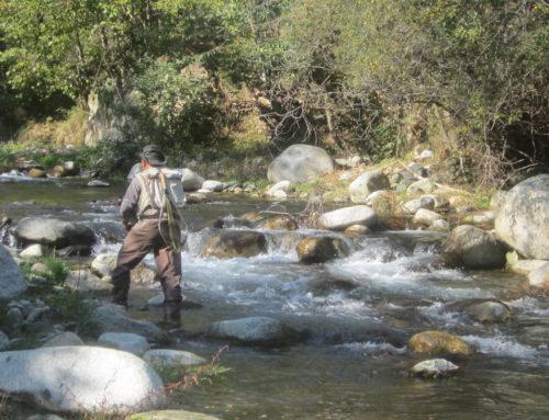 Pescar Truchas en Otoño en el Pirineo