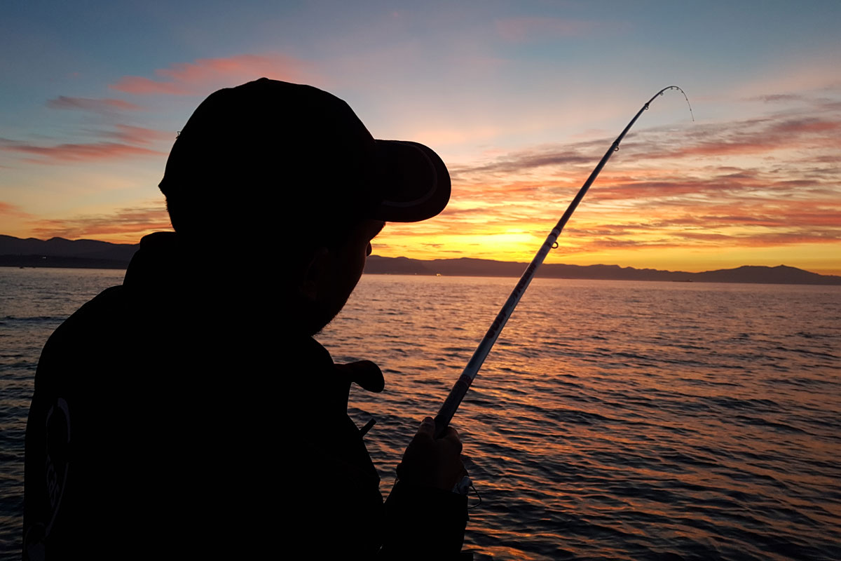 pesca del calamar con caña