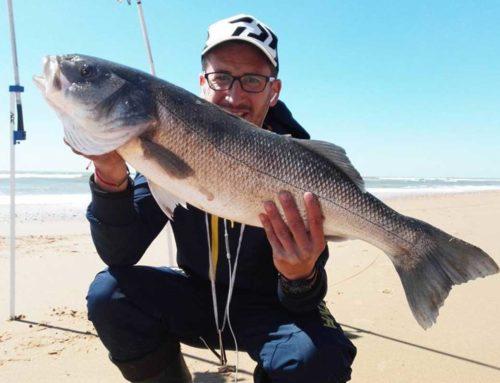Pesca una Lubina de 7 Kilos en Huelva
