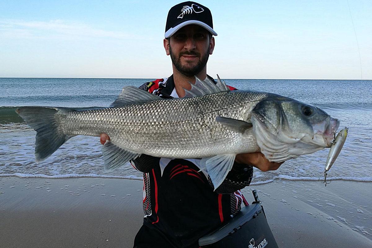 pescar lubinas a spinning