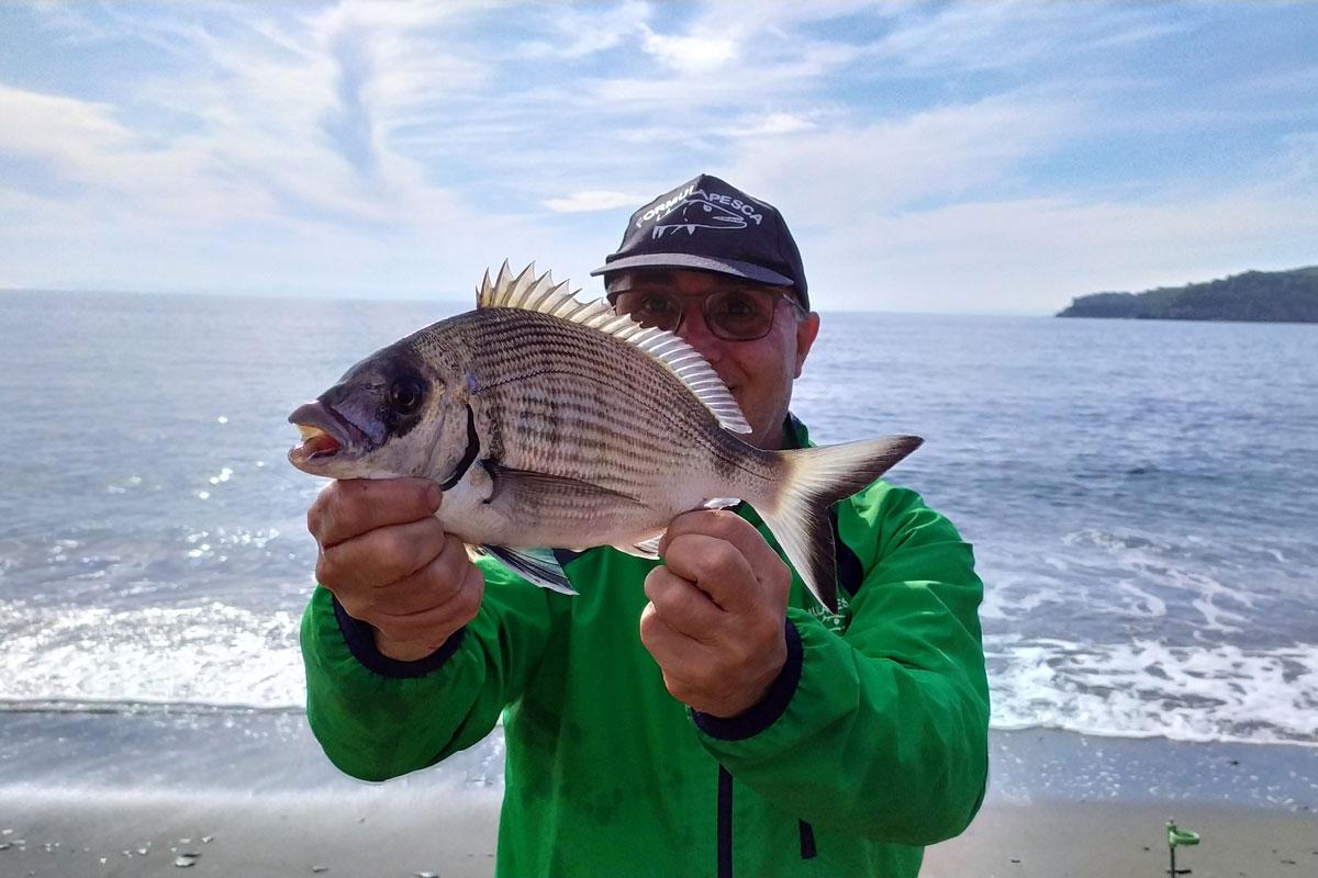 pesca sargo surfcasting